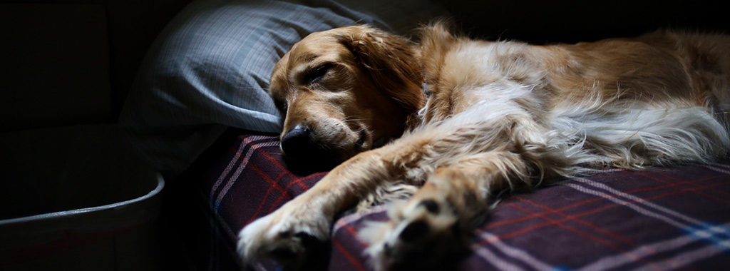 Memory Foam Dog Bed Made of Crumb Foam